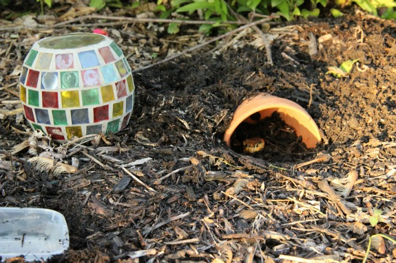 How to create a wildlife friendly backyard inner child Make your own toad house